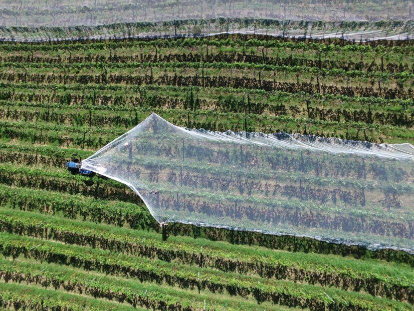 crops agricolture