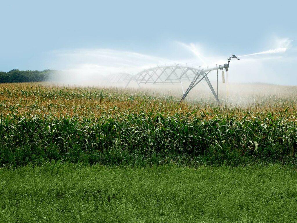 crop water